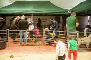 Mobile farm and animal hire for events in Gloucestershire and Wales.