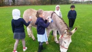 Donkey rides and grooming education school visit in Bristol.
