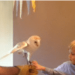 Boy holding an owl at a mobile zoo animal in Tewkesbury, Worcestershire.
